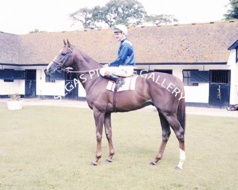 Racehorse Crow with Jockey Pat Eddery
